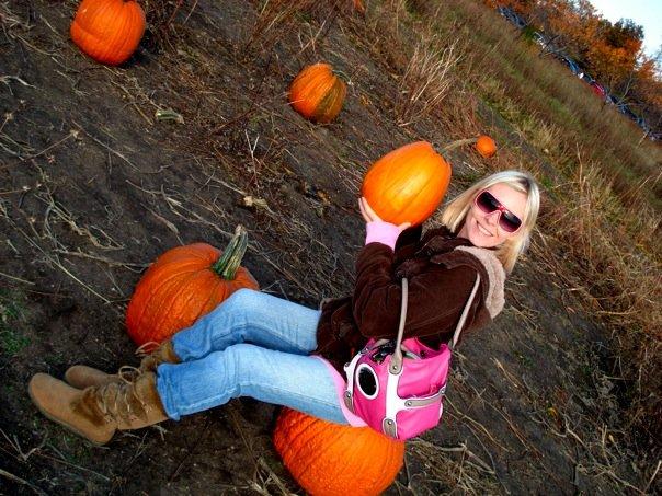 Apple Charlie's pumpkin patch